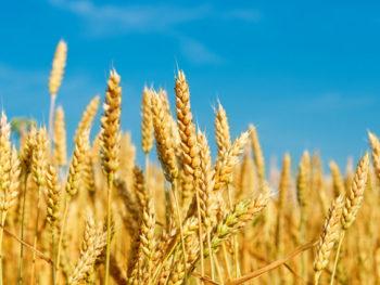 Comment réduire durablement les consommations d'énergie des agroéquipements ? Tendances et prospective